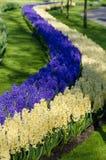 Paisagem surpreendente com as camas de flor e testes padrões de flor coloridos Imagens de Stock Royalty Free