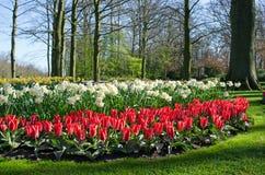 Paisagem surpreendente com as camas de flor e testes padrões de flor coloridos Foto de Stock Royalty Free