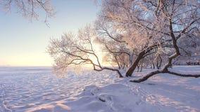 Paisagem surpreendente da natureza do inverno na luz solar da manhã Hoarfrost em árvores Árvores nevado na costa do lago do gelo  fotos de stock