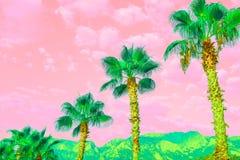 Paisagem surreal com palmas brilhantes e o céu nebuloso do cor-de-rosa-coral ilustração royalty free