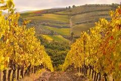 Paisagem típica de tuscan, vinhedo em Chianti foto de stock