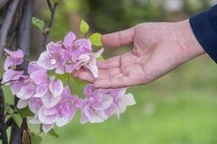 Paisagem tocante bonita da natureza do homem da flor da mão fotos de stock royalty free