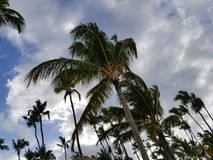 Paisagem tropical fotografia de stock