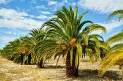 Paisagem tropical Imagem de Stock