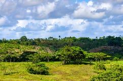 Paisagem tropical bonita com vegetação verde Imagem de Stock