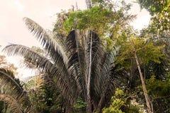 Paisagem tropical da floresta úmida, Amazonas, Cuyabeno, Equador imagem de stock