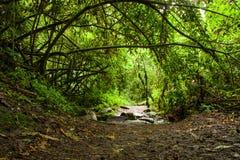 Paisagem tropical da floresta húmida, Equador Fotos de Stock Royalty Free