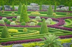 Paisagem tropical da árvore das plantas decorativas no jardim da natureza Foto de Stock Royalty Free