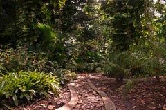 Paisagem tropical do jardim Fotografia de Stock Royalty Free