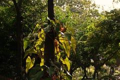 Paisagem tropical do jardim Fotografia de Stock