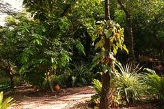 Paisagem tropical do jardim Imagens de Stock Royalty Free