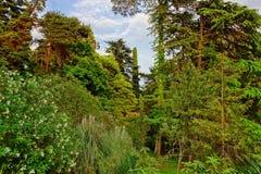 Paisagem tropical do jardim botânico no verão Fotografia de Stock