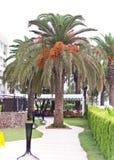 Paisagem tropical Trajeto de passeio no hotel do território Imagem de Stock