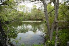 Paisagem: U do nordeste S Lagoa com Lily Pads na mola Foto de Stock Royalty Free