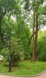 Paisagem Uma lanterna que seja ficada situada perto de um trajeto de uma pedra Um arbusto verde cresce atrás da lanterna Em torno fotos de stock royalty free