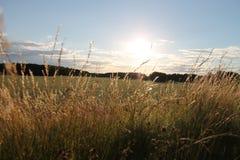 Paisagem ventosa do verão da Suécia Foto de Stock