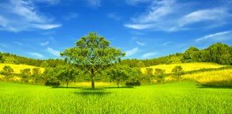 Paisagem verde Foto de Stock Royalty Free
