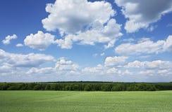Paisagem verde Foto de Stock