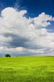 Paisagem verde Fotos de Stock Royalty Free