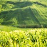 Paisagem verde Fotografia de Stock