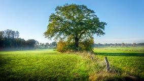 Paisagem verde bonita na manhã com carvalho e névoa grandes imagens de stock