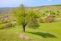 Paisagem verde com árvore Fotografia de Stock
