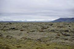 Paisagem verde da natureza islandêsa com as pedras cobertas pelo musgo com as montanhas no fundo Imagem de Stock Royalty Free