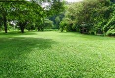 Paisagem verde do gramado com árvore grande Foto de Stock Royalty Free