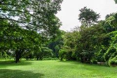 Paisagem verde do gramado com árvore grande Fotografia de Stock