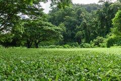 Paisagem verde do gramado com árvore grande Imagem de Stock Royalty Free