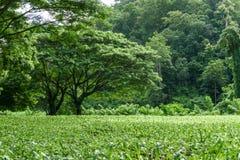 Paisagem verde do gramado com árvore grande Imagens de Stock