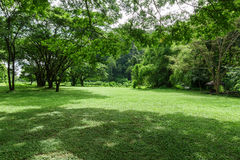 Paisagem verde do gramado com árvore grande Imagem de Stock