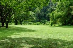 Paisagem verde do gramado com árvore grande Fotos de Stock Royalty Free