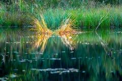 Paisagem verde do pântano Fotos de Stock Royalty Free