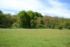 Paisagem verde do prado Foto de Stock