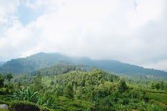Paisagem verde em um pico nevoento imagem de stock