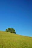 Paisagem verdejante da mola Foto de Stock Royalty Free