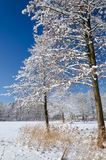 Inverno na costa do lago Imagem de Stock Royalty Free