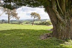 Paisagem Victoria, Austrália Imagem de Stock Royalty Free