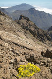 Paisagem vulcânica no La Palma Caldera de Taburiente spain Foto de Stock Royalty Free