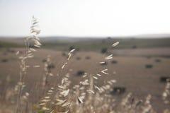 paisagens Fotos de Stock