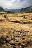 Paisagens alpinas da cena Fotos de Stock Royalty Free