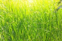 Paisagens bonitas com campos do arroz Fotografia de Stock Royalty Free