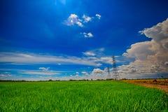 Paisagens bonitas com campos do arroz e o céu azul Fotos de Stock Royalty Free