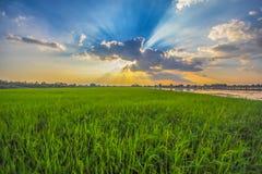 Paisagens bonitas com campos do arroz e o céu azul Fotografia de Stock Royalty Free