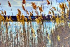 Paisagens bonitas de Rússia Região de Rostov Lugares coloridos Vegetação e rios verdes com lagos e pântanos Florestas e mea foto de stock royalty free