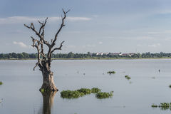 Paisagens com a árvore seca no lago Fotografia de Stock Royalty Free