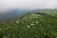 Paisagens da mola nas montanhas Imagens de Stock Royalty Free