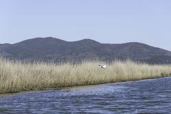 Paisagens da reserva natural de Diaccia Botrona Imagens de Stock