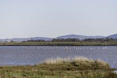 Paisagens da reserva natural de Diaccia Botrona Foto de Stock Royalty Free